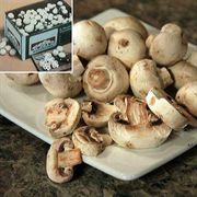 3 Lb. Button Mushroom-Growing Kit