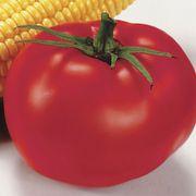 Better Boy Hybrid Tomato (pack of 3)