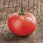 Beefmaster Hybrid Tomato Plant
