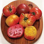 Rainbow Blend Heirloom Tomato Plants (pack of 3)