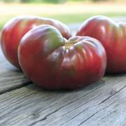 Cherokee Purple Tomato Grafted Plant