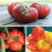 Heirloom Grafted Tomato Trio Annual Plant Collection