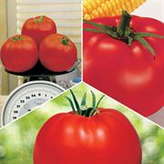 Tomato Sampler Pack Annual Plant Collection