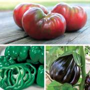 Heirloom Vegetable Garden Combination Annual Plants