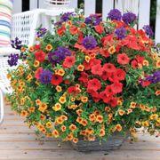 Calypso Garden Combination