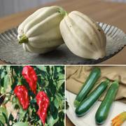 Vegetable Sampler Collection image