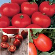 Heirloom Tomato Collection image