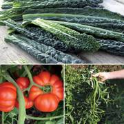 Heirloom Summer Vegetable Collection image