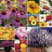 Customer Favorites Seed Collection
