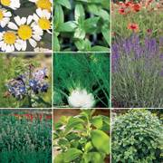 Herbal Tea Seeds Collection