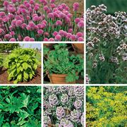 Organic Herb Seeds Collection image