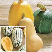 Winter Squash Organic Collection