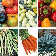 Gourmet Vegetable Seed Collection