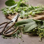 Italian Herb Seeds Collection image