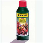 Algoflash Cut Flower Preserver