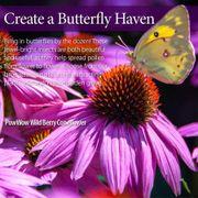 PowWow® Wild Berry Coneflower Alternate Image 3
