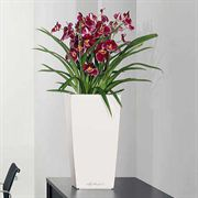 Lechuza White All in One Cubico Self Watering Planter