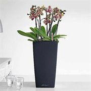 Lechuza Black All in One Cubico Self Watering Planter
