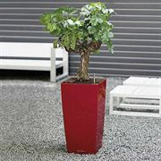 Lechuza Scarlet Red All in One Cubico Self Watering Planter