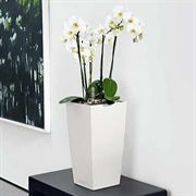 Lechuza White All in One Cubico Color Self Watering Planter