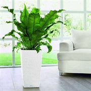 Lechuza White All in One Cubico Cottage Self Watering Planter
