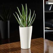 Lechuza White All in One Delta Self Watering Planter