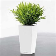Lechuza 7 inch All in One Mini Cubi Self Watering Planter