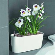 Lechuza White All in One Delta Self Watering Windowsill Planter