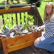 Western Red Cedar Planter Boxes