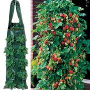 Growin' Bags 10 Hole Alternate Image 5