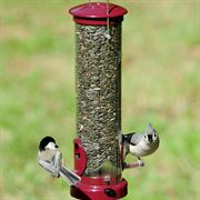 Berry Seed Tube Birdfeeder