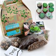 Do-it-Yourself Succulent Terrarium Kit