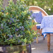 Bushel and Berry® Blueberry Peach Sorbet® Alternate Image 1