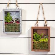 Succulent Plant Portraits image