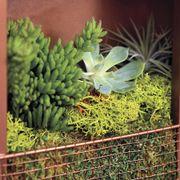 Succulent Plant Portraits Alternate Image 1