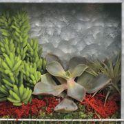 Succulent Plant Portraits Alternate Image 2