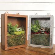 Succulent Plant Portraits Alternate Image 3