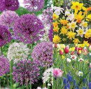 Garden Box Collections image