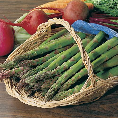 Shop All Asparagus Seeds and Plants