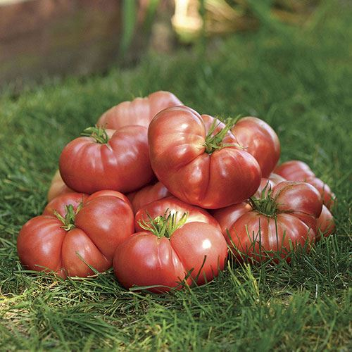 Shop All Heirloom Tomatoes