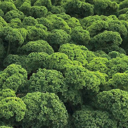 Shop All Kale Seeds