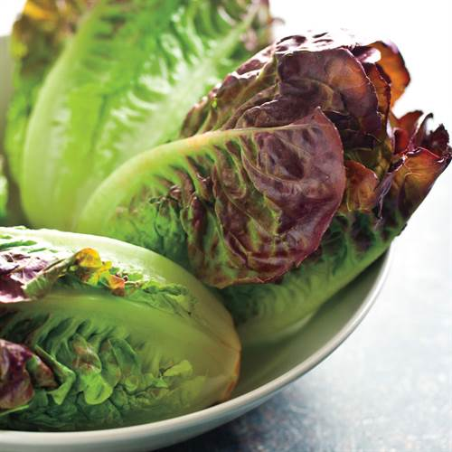 Shop All Lettuce Seeds