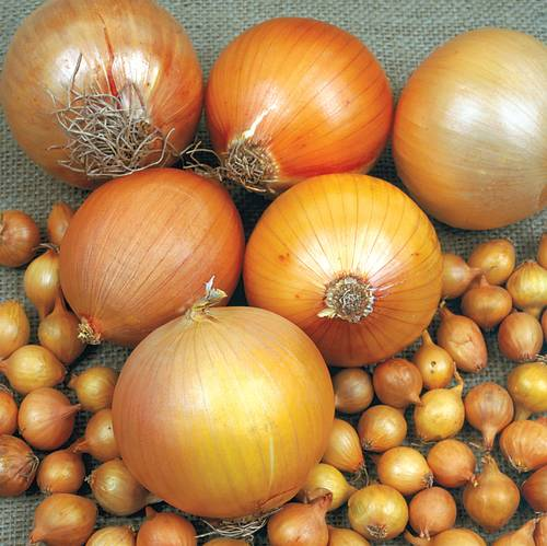 Shop All Onion Plants & Seeds
