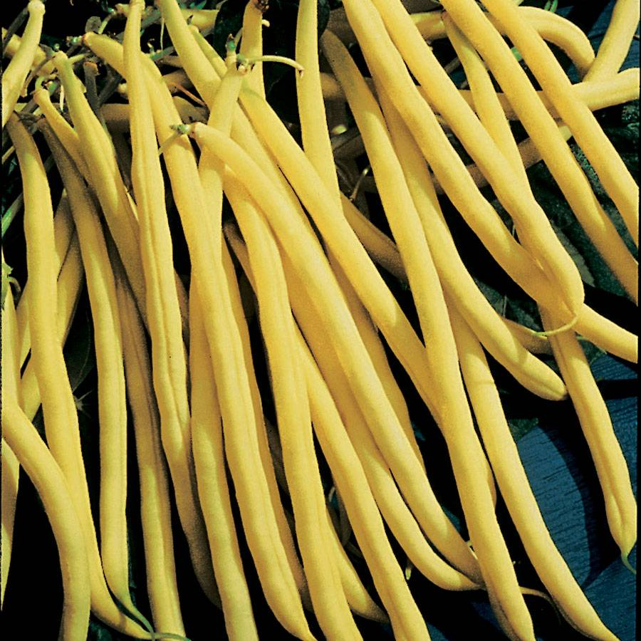 Rocdor Bush Bean Seeds Image