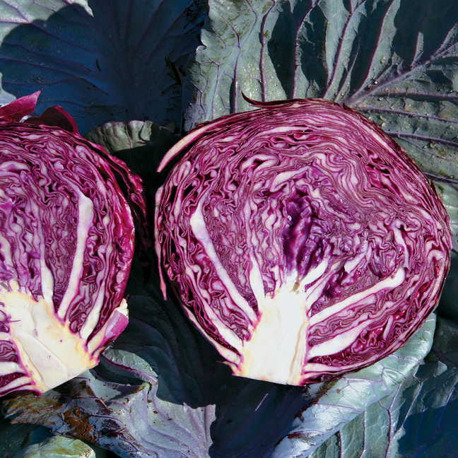 Garden Patio Vegetable Seeds Cabbage Purple Savoy Grow Your Own As It S Easy Satisfying 50 Seeds Bortexgroup Com