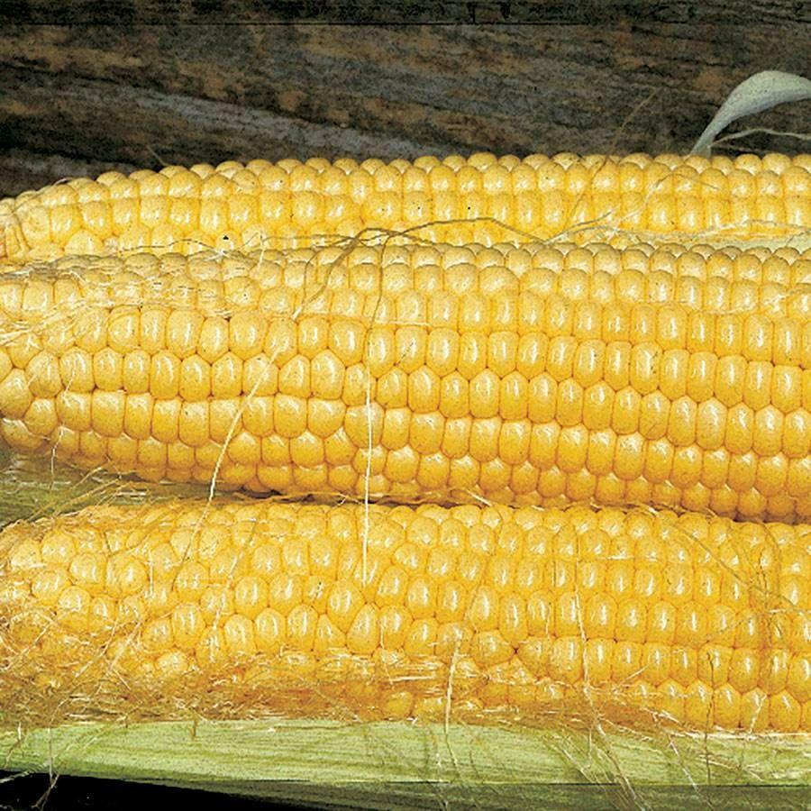 Butterfruit Original Early Corn Seeds Image
