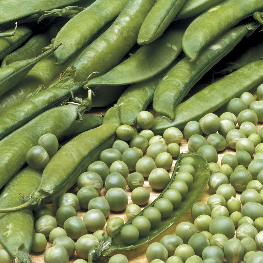 Lincoln Pea Seeds Image