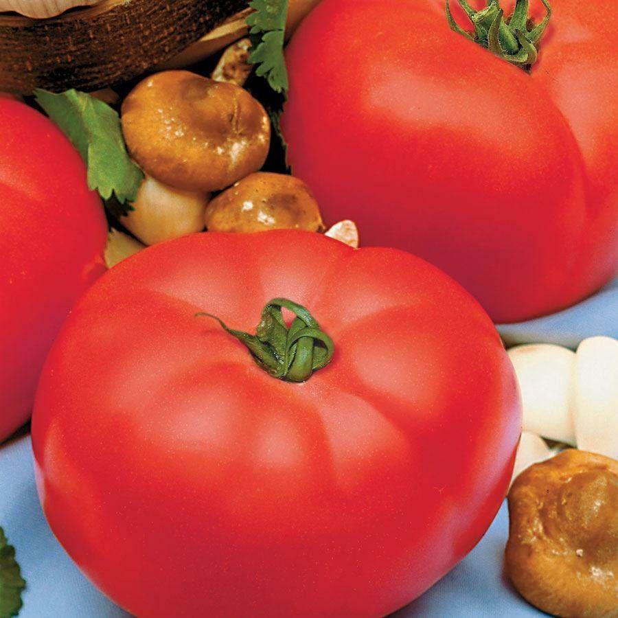 Beefmaster Hybrid Tomato Seeds Image