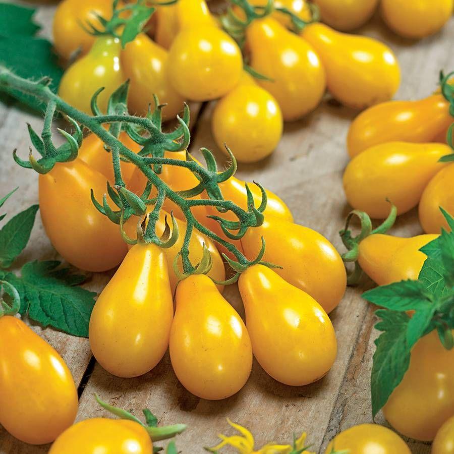 Yellow Pear Organic Tomato Seeds Image
