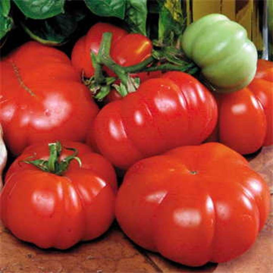 Costoluto Genovese Tomato Seeds Image